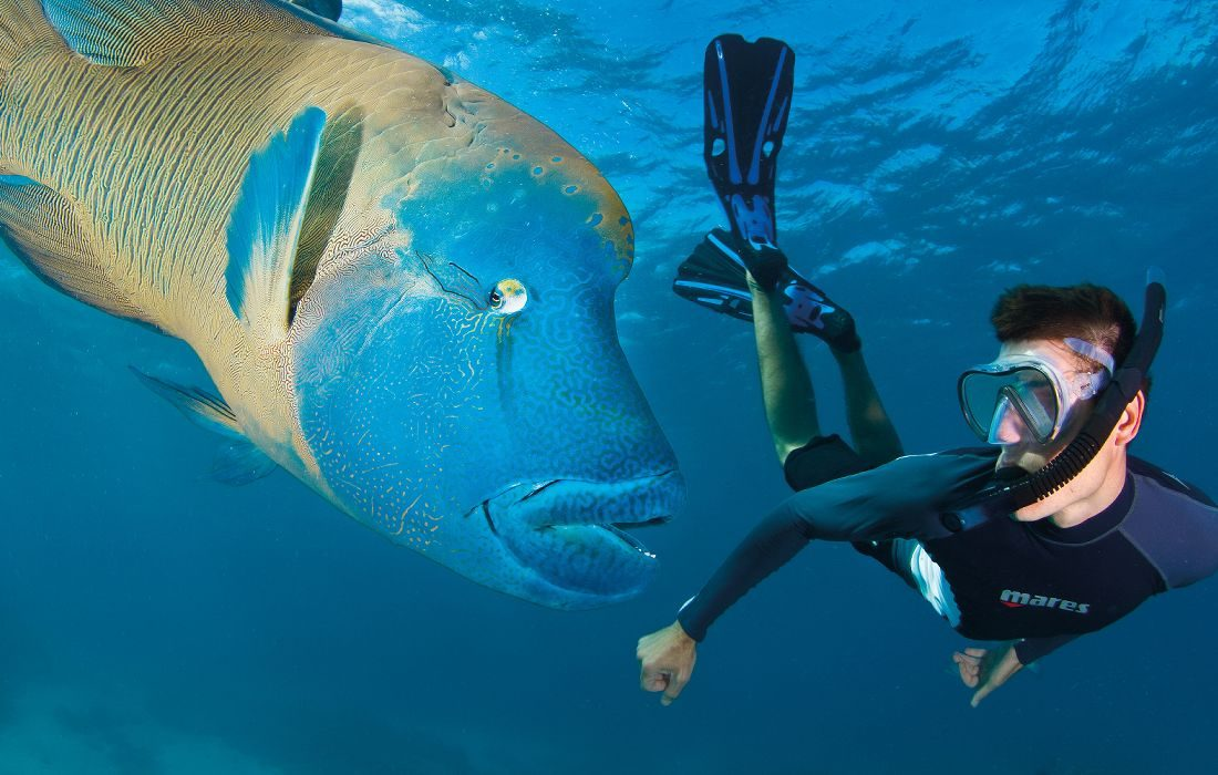 port-douglas-snorkeling