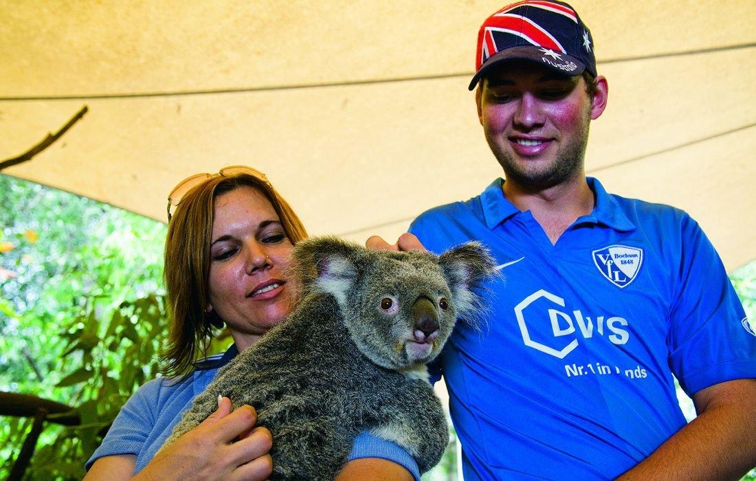 port-douglas-holiday-koala